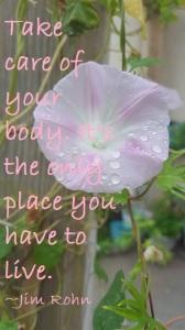 body quote